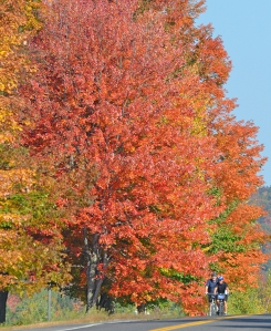 Autumn-Blog-Photo-6